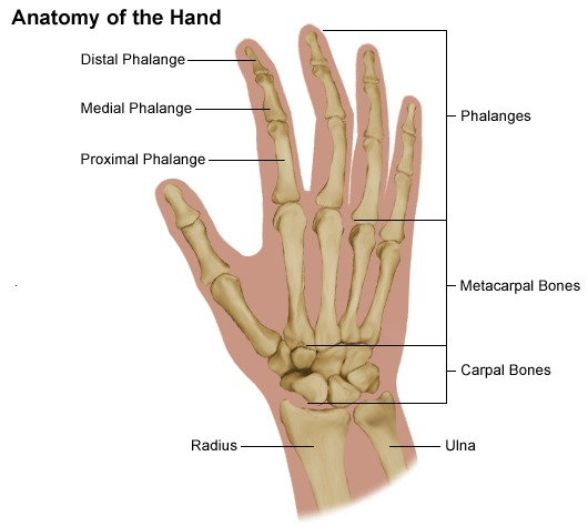 Hand Pain And Problems Stanford Health Care