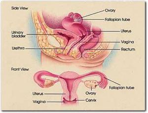 Fallopian Tube Recanalization Procedure | Stanford Health Care